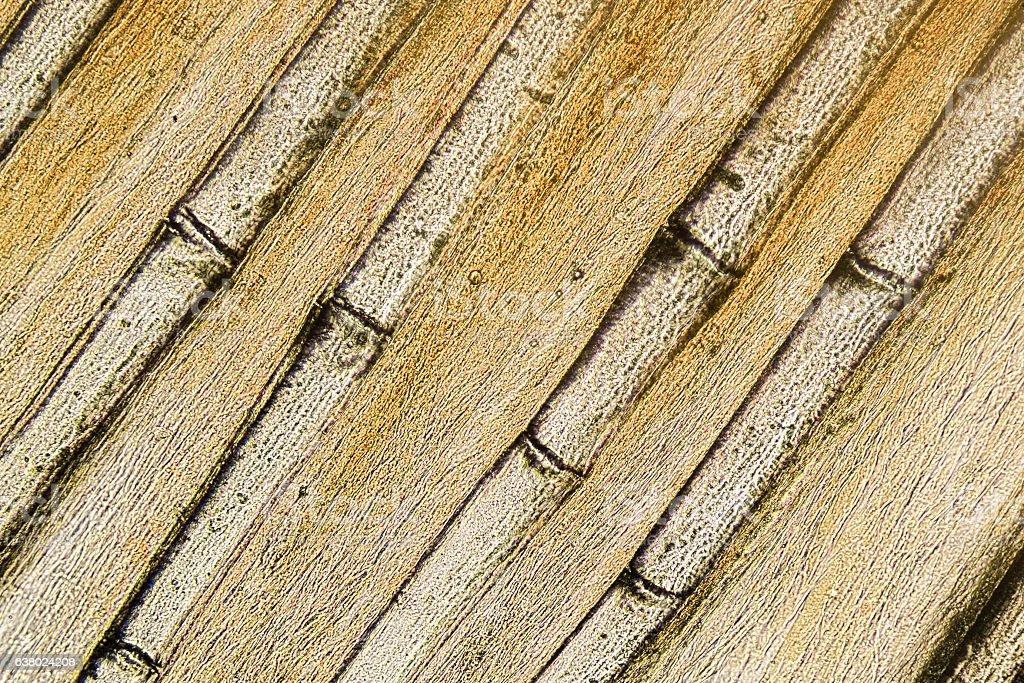 Perch pectoral fin structure. stock photo
