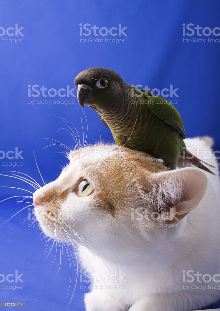 Perched royalty-free stock photo
