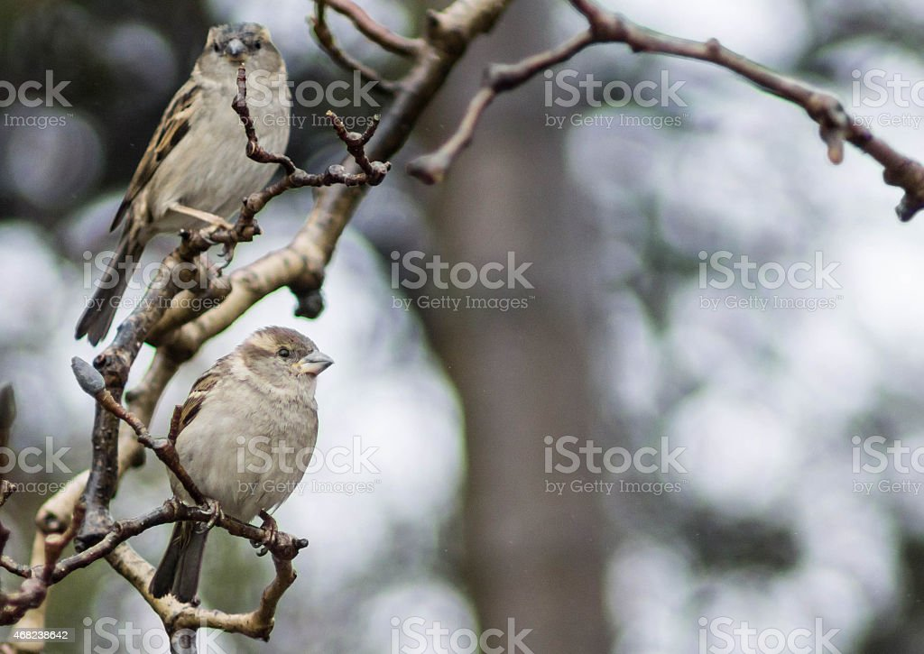 Perched Small Grey Bird stock photo