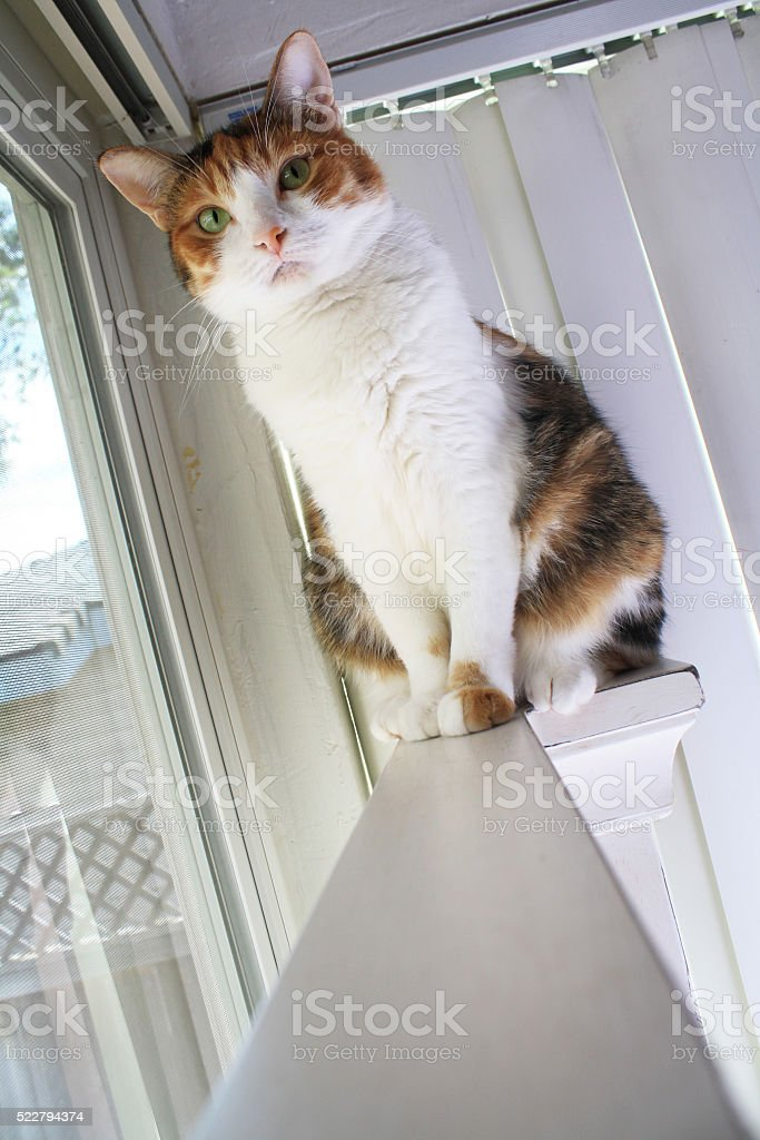 Perching Calico Cat stock photo