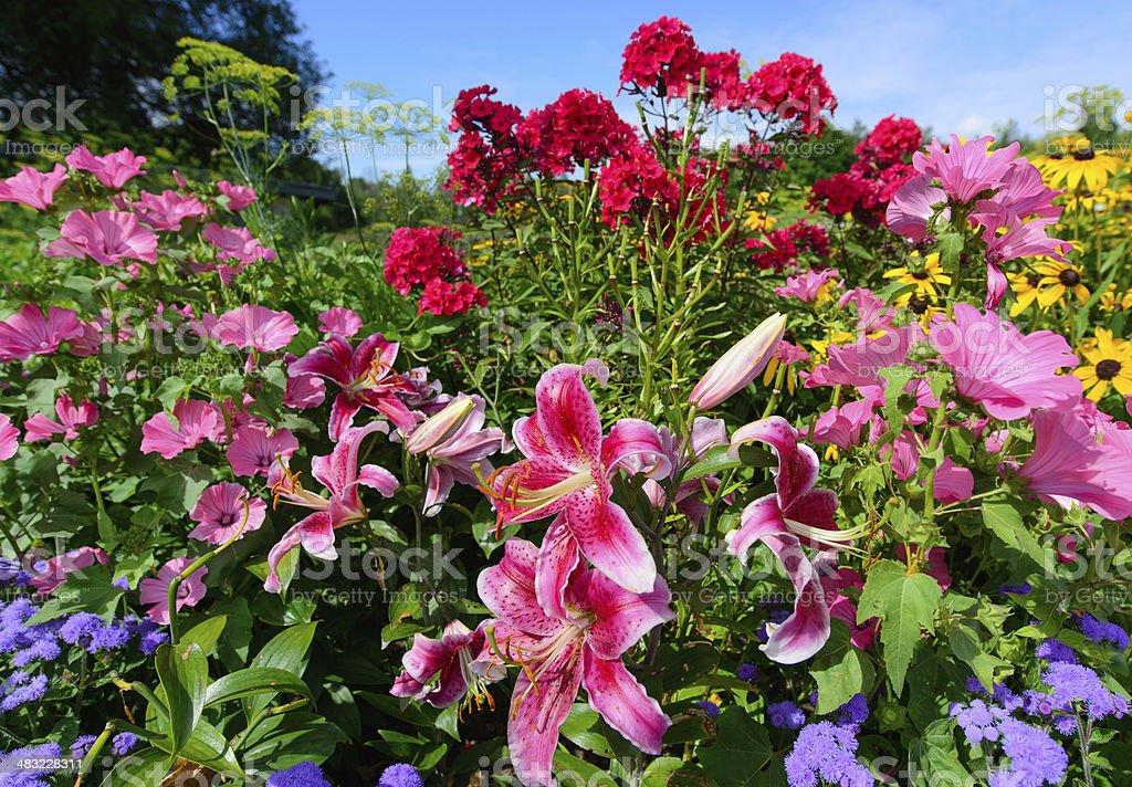 Perennial Flowers - Horizontal stock photo