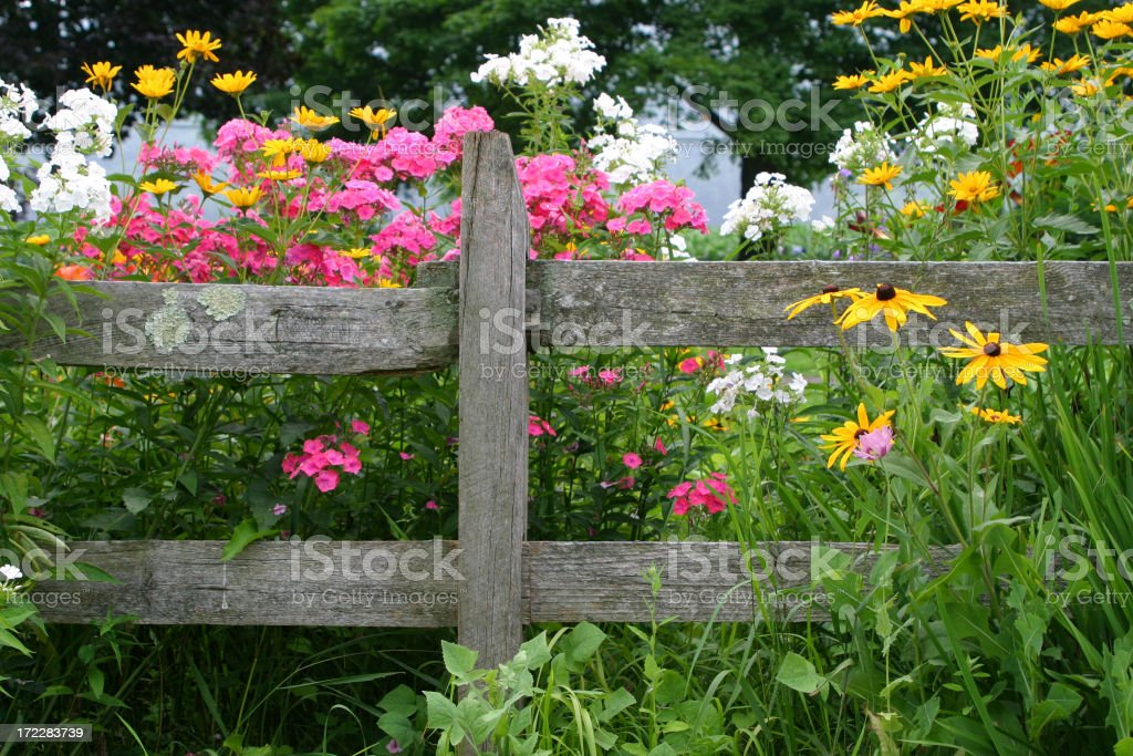 Perennial Garden stock photo