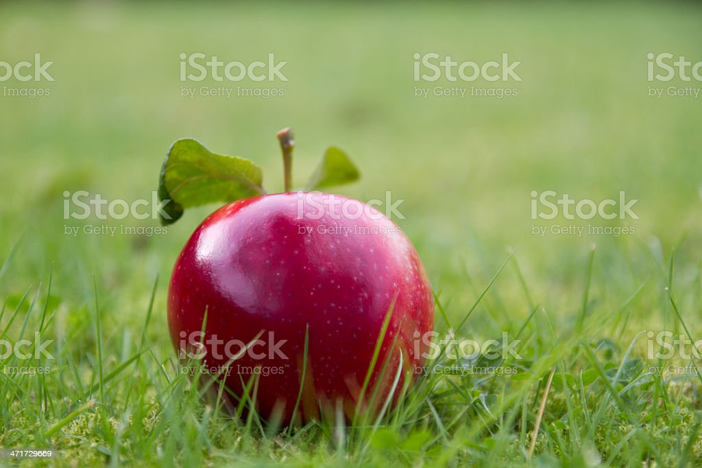 Perfect apple royalty-free stock photo