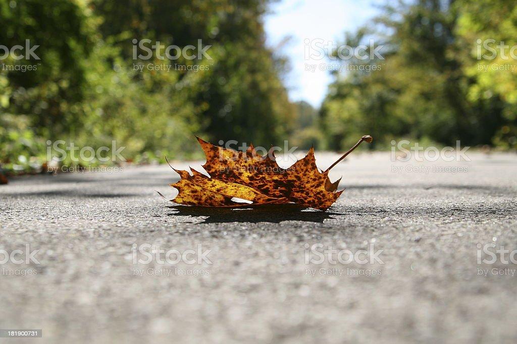 Perfect autumn illustration royalty-free stock photo