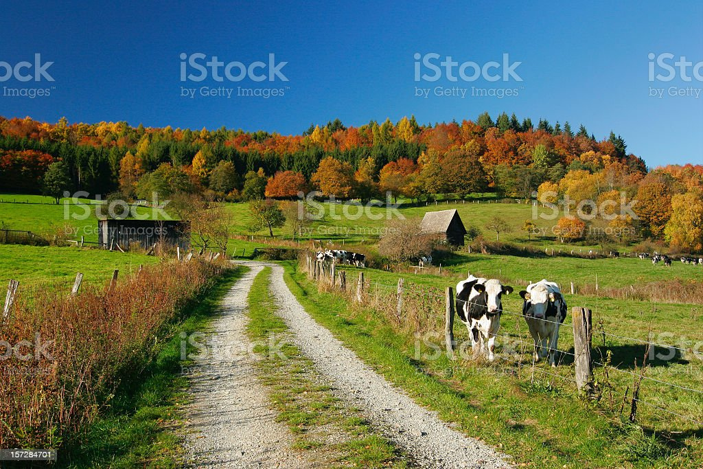 Perfect Autumn Landscape royalty-free stock photo