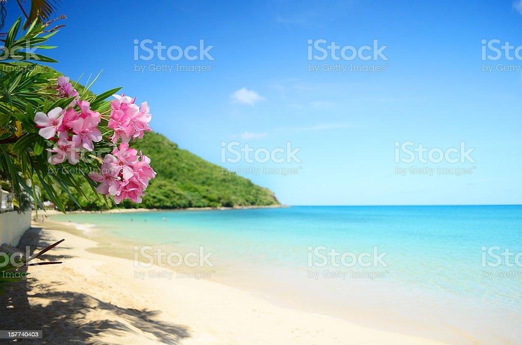perfect beach stock photo