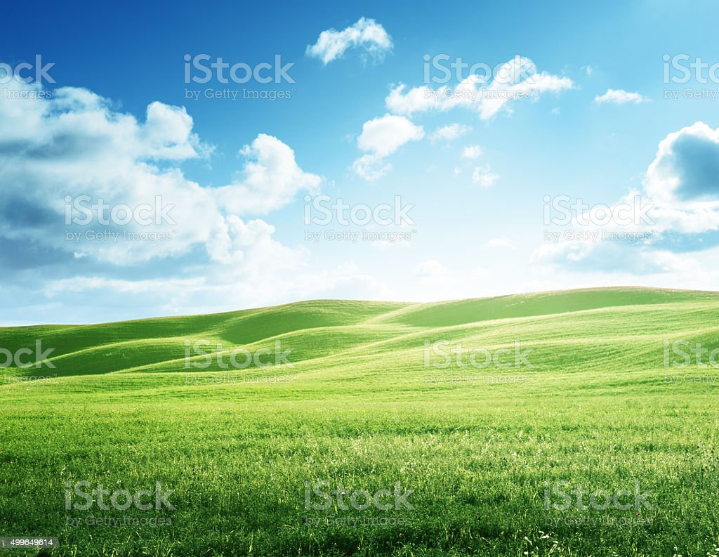 perfect field of spring grass stock photo