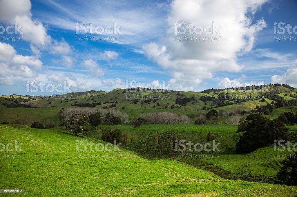 Perfect Fluffy Clouds Over Rolling New Zealand Farmland stock photo