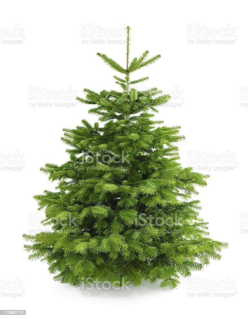 Perfect fresh Christmas tree without ornaments stock photo
