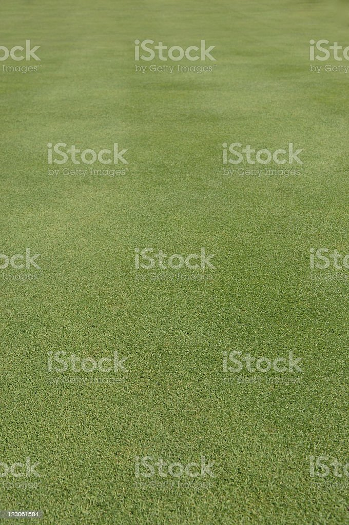 Perfect grass XL blurred royalty-free stock photo