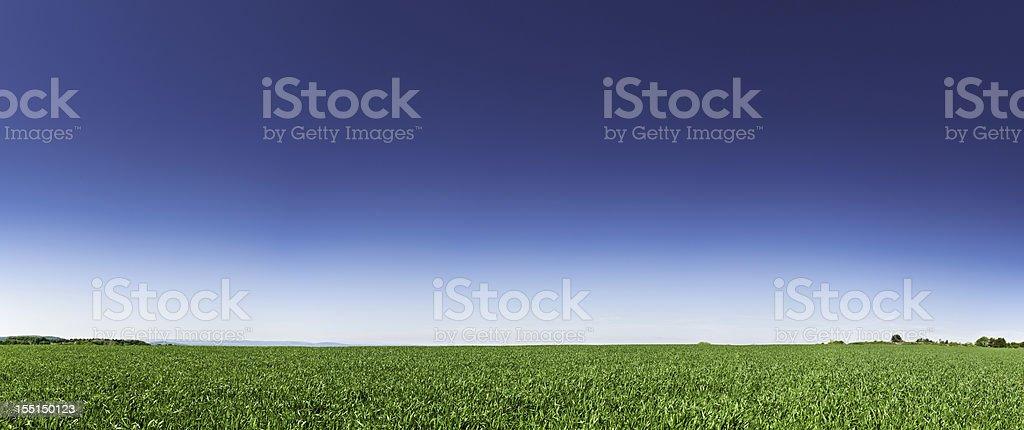 Perfect green field under big blue summer sky stock photo