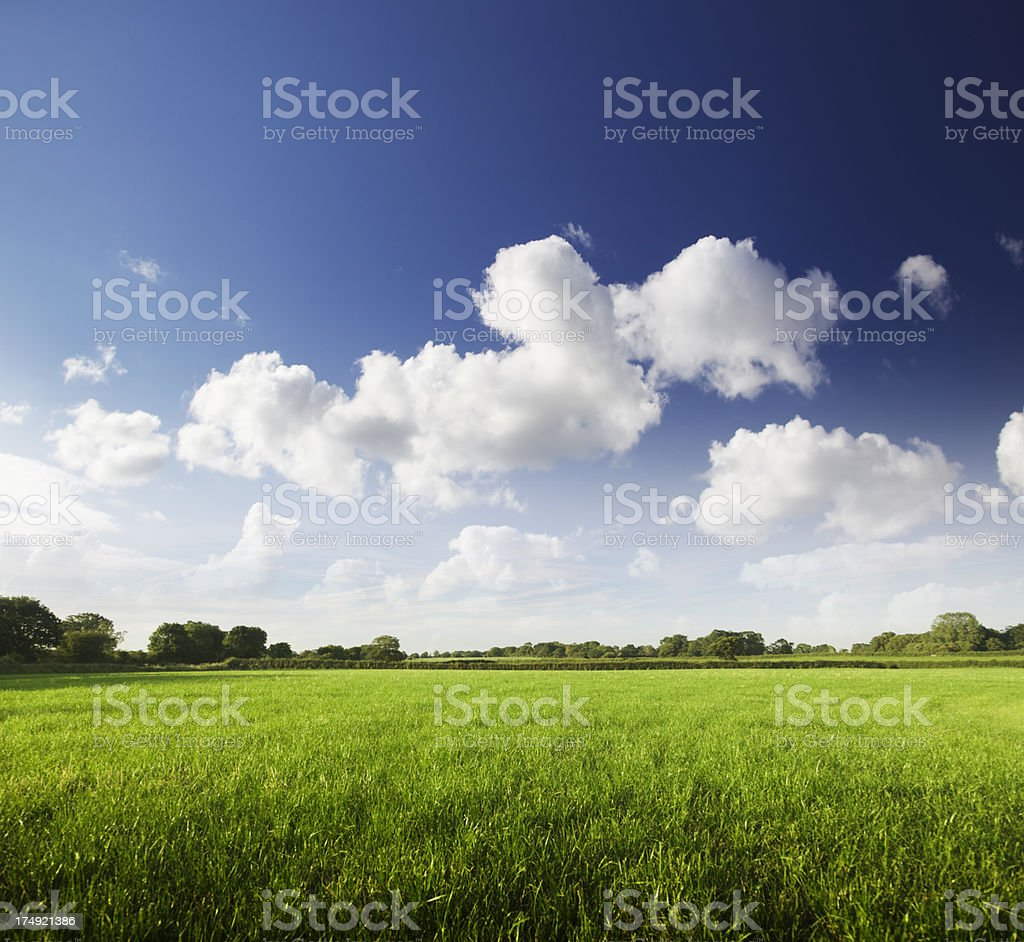 Perfect Green Fields royalty-free stock photo