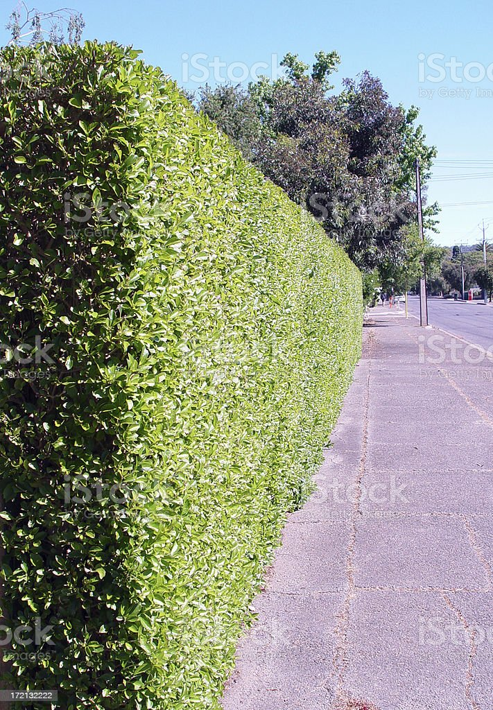 Perfect hedge royalty-free stock photo
