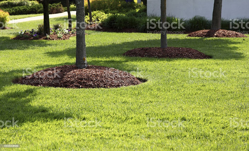 Perfect Lawn royalty-free stock photo