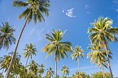Perfect Palm Tree Background against a Tropical Blue Sky