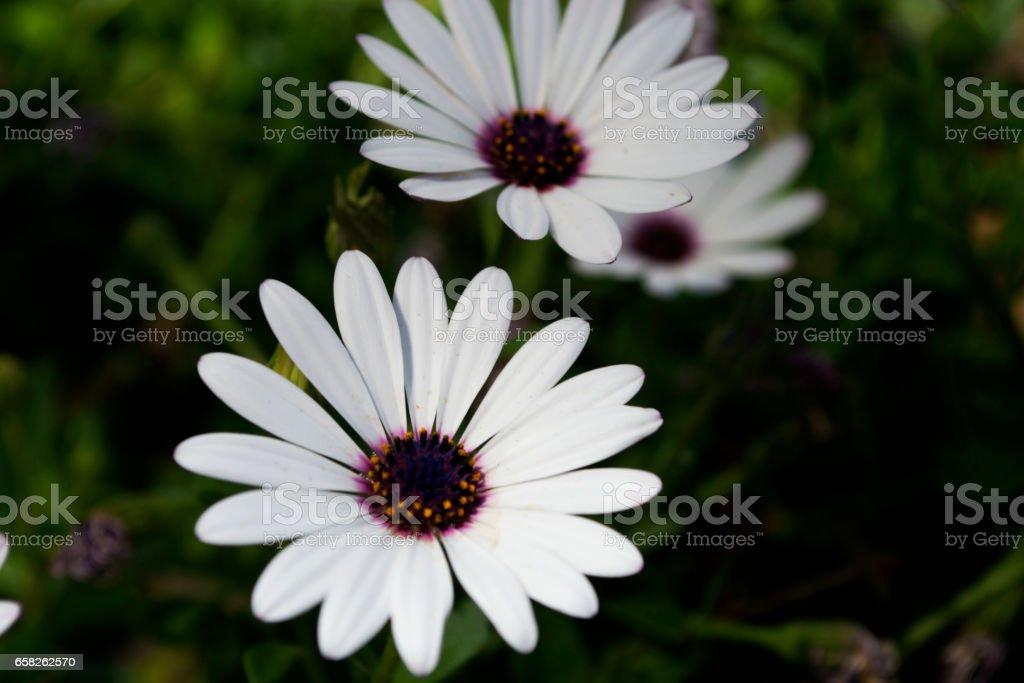 Perfect Petals stock photo