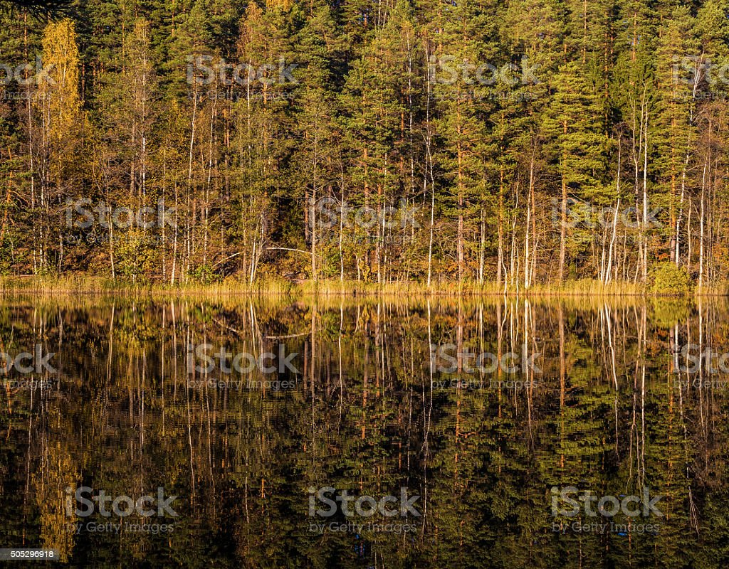 Perfect reflection of Finnish forest stock photo