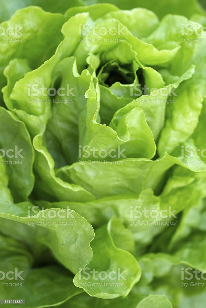 Perfect Salad stock photo