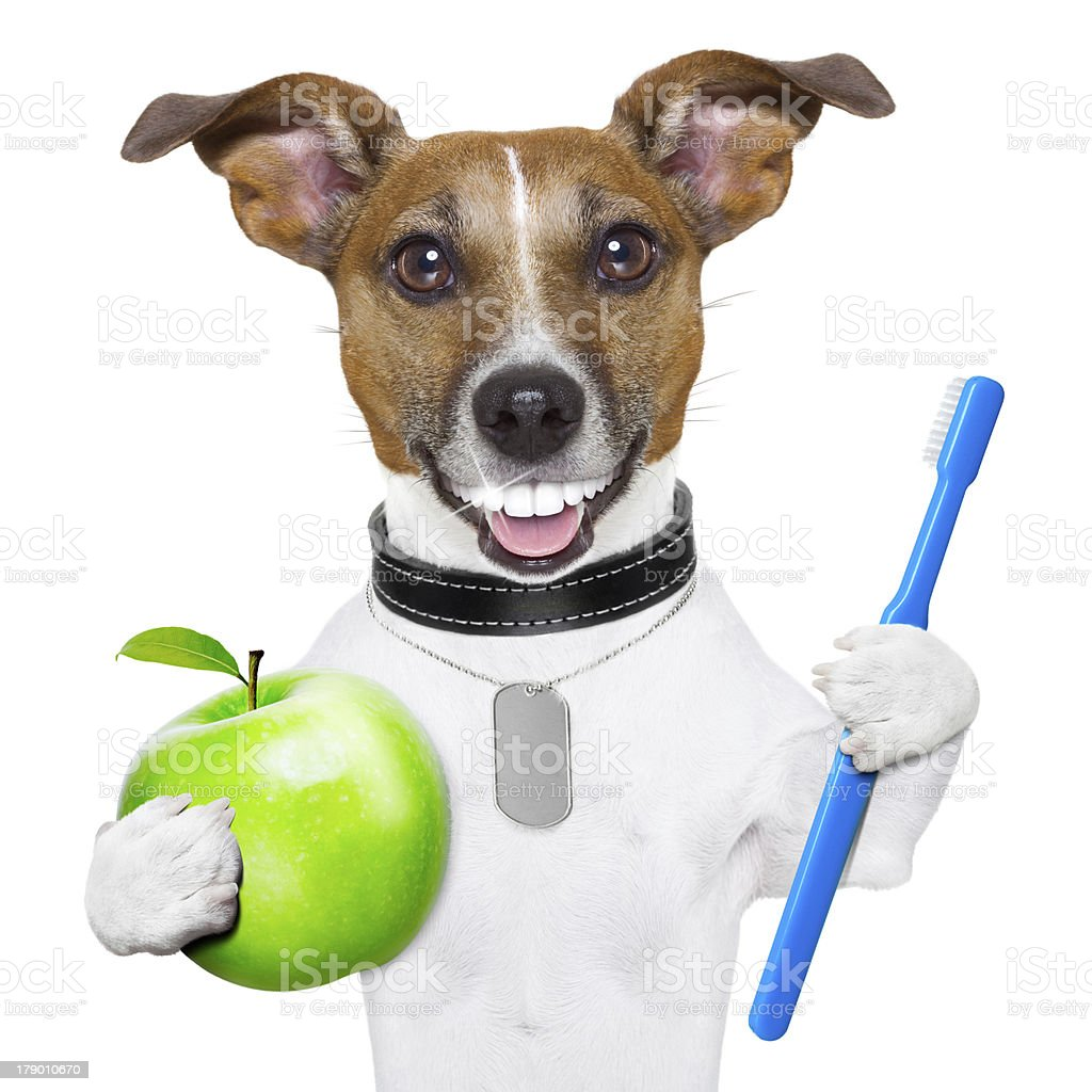 perfect smile dog royalty-free stock photo