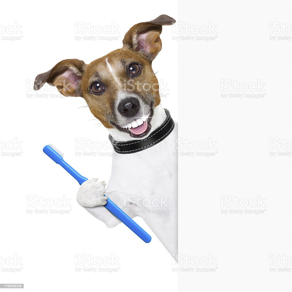 perfect smile dog stock photo