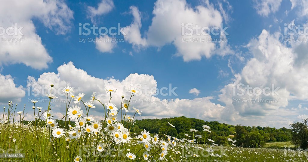 Perfect Spring meadow big skies royalty-free stock photo