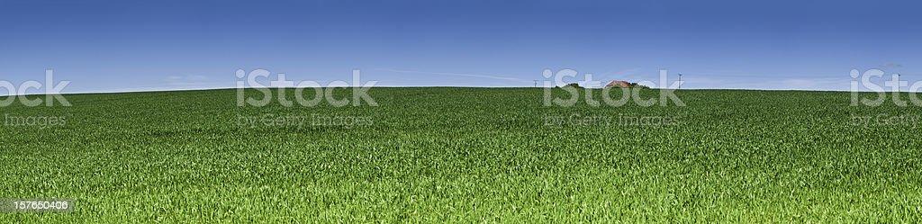 Perfect summer green landscape blue sky panorama crop field farm stock photo