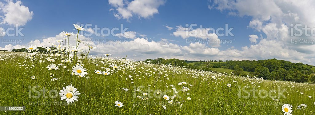 Perfect summer meadow stock photo