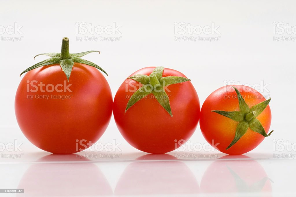 perfect tomato stock photo