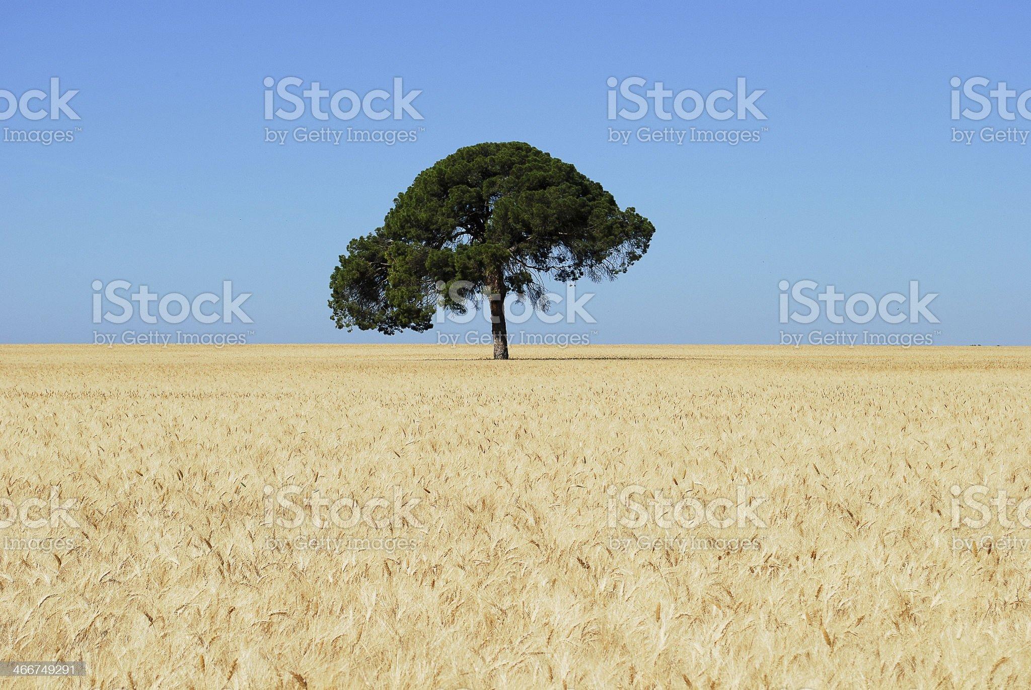 Perfect tree royalty-free stock photo