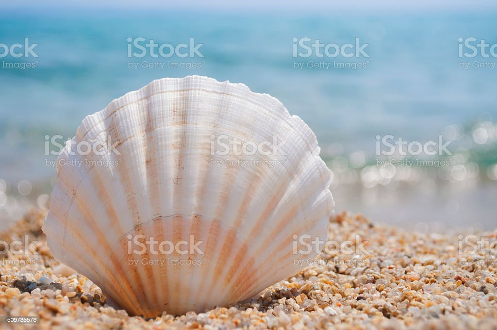 Perfect vacation on the beach stock photo