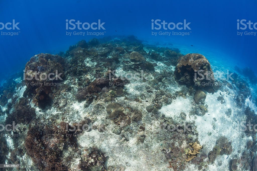 Perfect Visibility, Deep Outer Reef, Raja Ampat, Papua, Indonesia stock photo