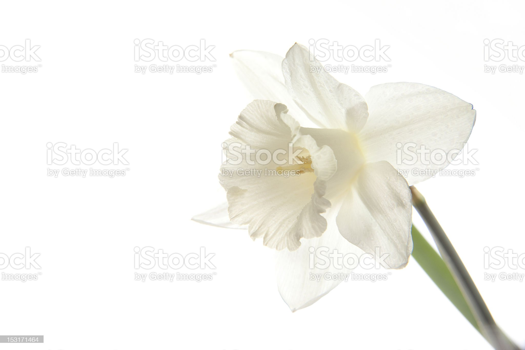 Perfect white flower for your background royalty-free stock photo
