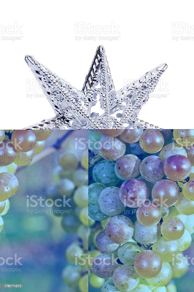 Perfect Wine Grape Bunches Ripening in Vineyard stock photo