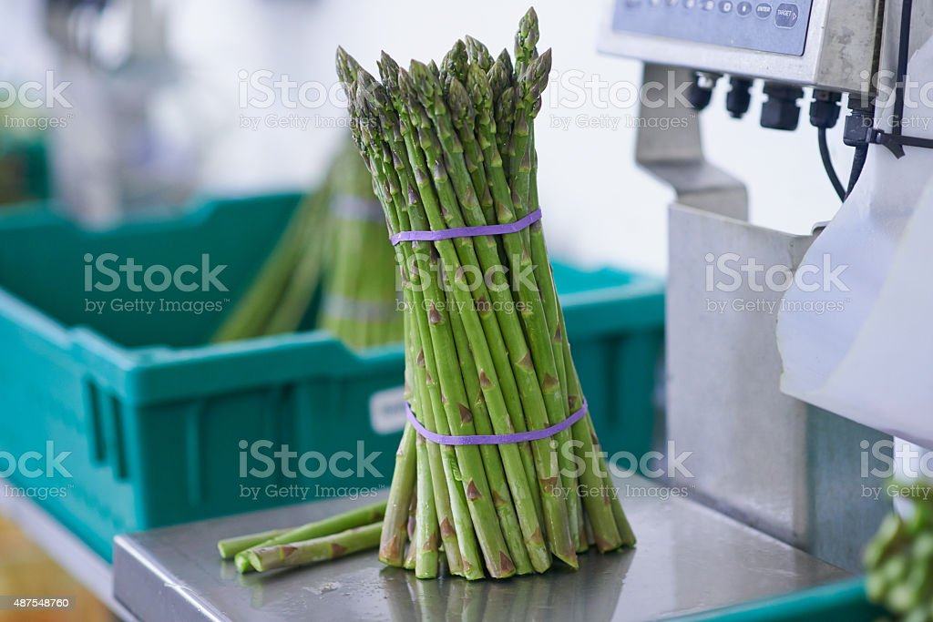 Perfectly arranged and ready to be weighed stock photo