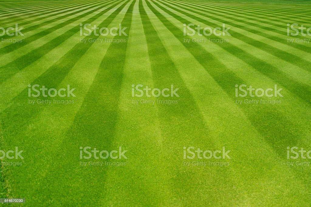 Perfectly striped freshly mowed garden lawn royalty-free stock photo