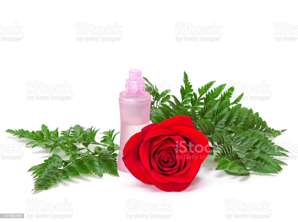 Perfume bottle with natural red rose and fern leaves stock photo