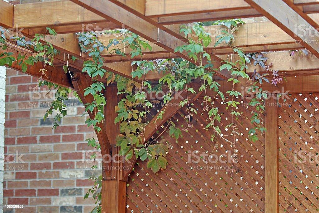 Pergola with vines stock photo