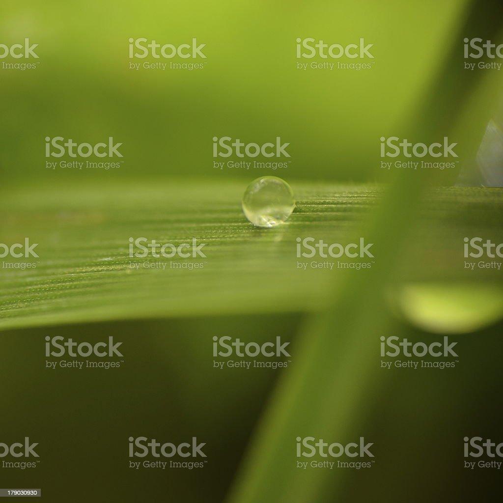 perle d'eau royalty-free stock photo