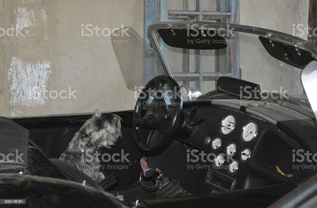 perro en convertible stock photo