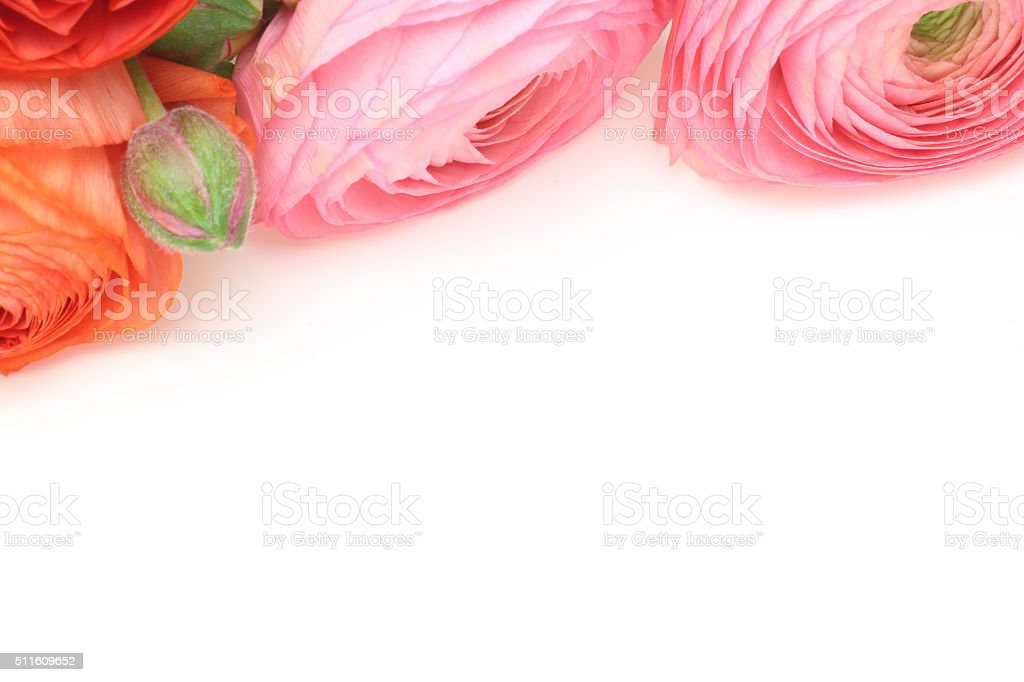 Persian buttercup stock photo