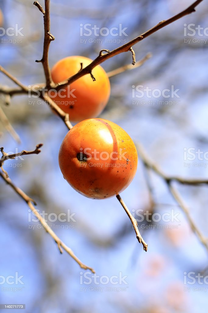 Persimmon fruits royalty-free stock photo