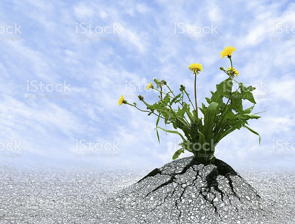Persist and Succeed stock photo