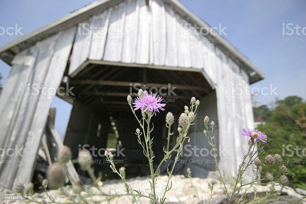 Persistent Flower stock photo
