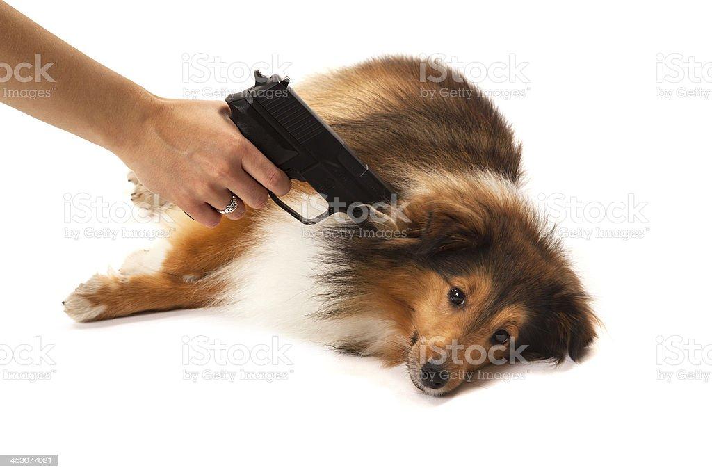 Person aiming handgun on dog royalty-free stock photo