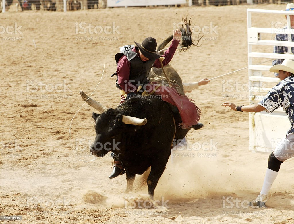 A person attempting to ride a bull stock photo