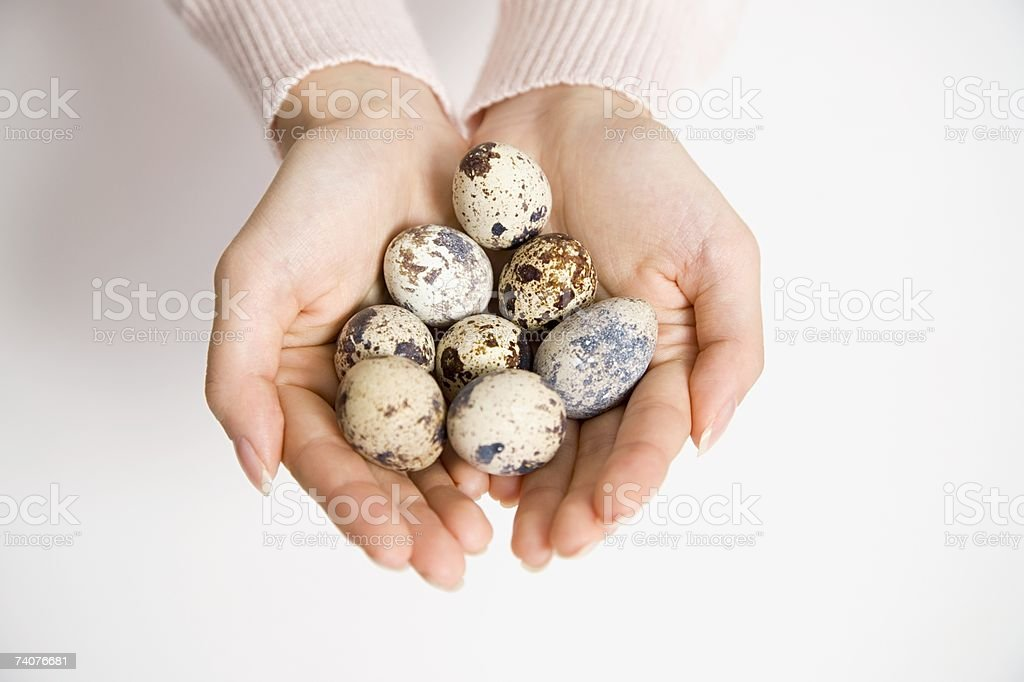 Person holding eggs stock photo
