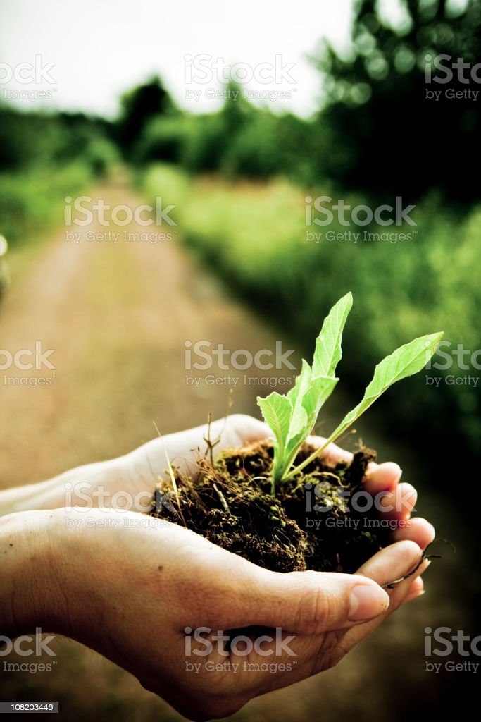 Person Holding Seedling of Plant On Farm royalty-free stock photo