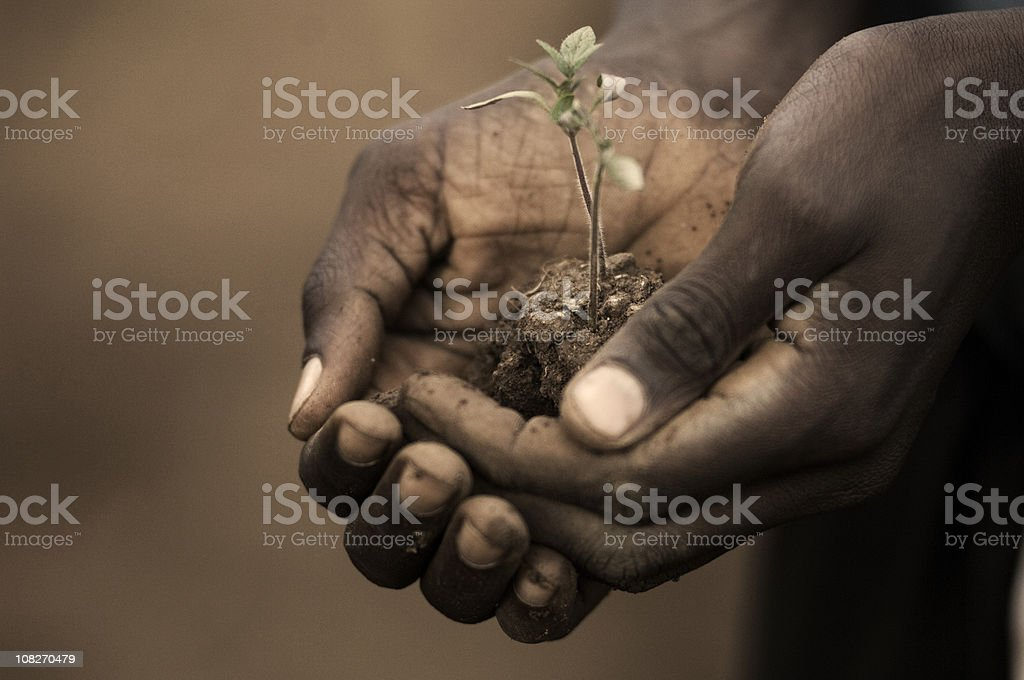 Person Holding Seedling of Plant stock photo