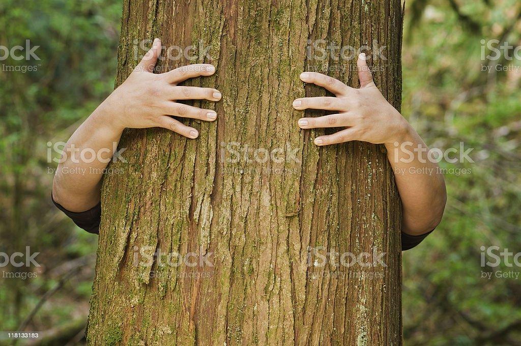 Person hugs a tree royalty-free stock photo