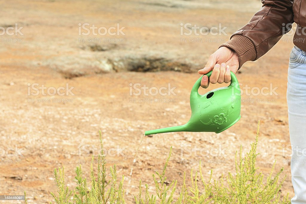 person  pouring green plant stock photo
